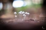 Laura Forest Mushrooms
