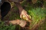 mushroom forage may 2013-2