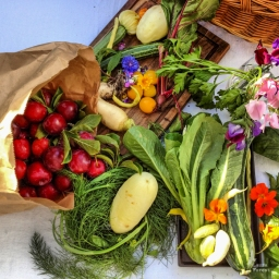 summer harvest at kelmarna gardens