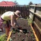Planting the garden 2 months ago.